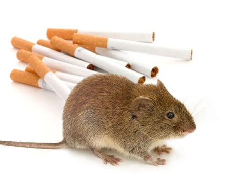 mouse-attracted-to-combustibles